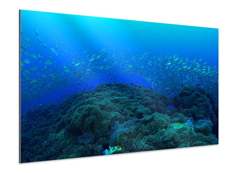 Aluminiumbild Fischschwärme