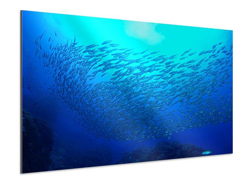 Aluminiumbild Fischwelt