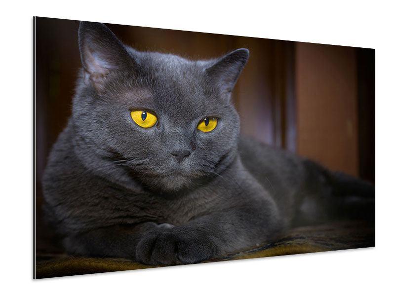 Aluminiumbild Katzengöttin