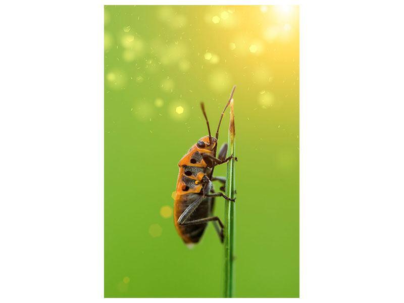 Aluminiumbild Das Insekt
