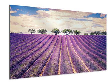 Aluminiumbild Das Lavendelfeld