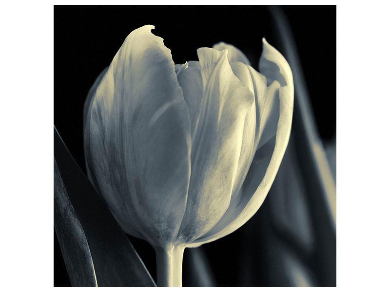 Aluminiumbild Schwarzweissfotografie XXL Tulpe
