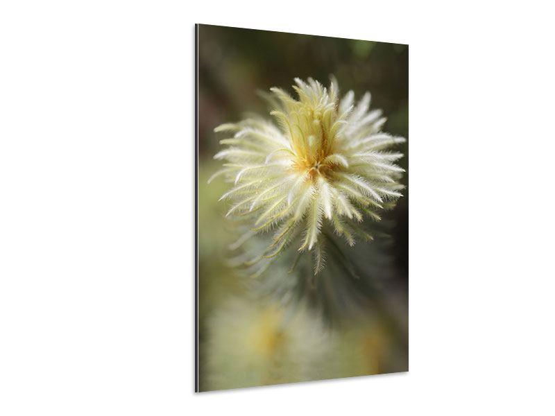 Aluminiumbild Die Frühlingsblüte