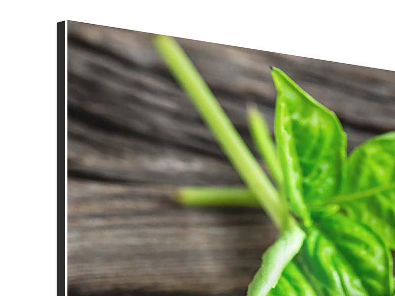 Aluminiumbild Basilikumblätter