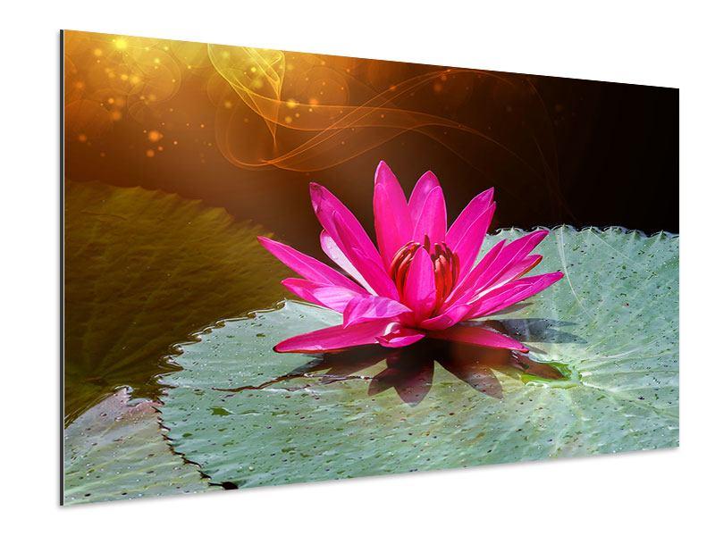 Aluminiumbild Der Frosch und das Seerosenblatt