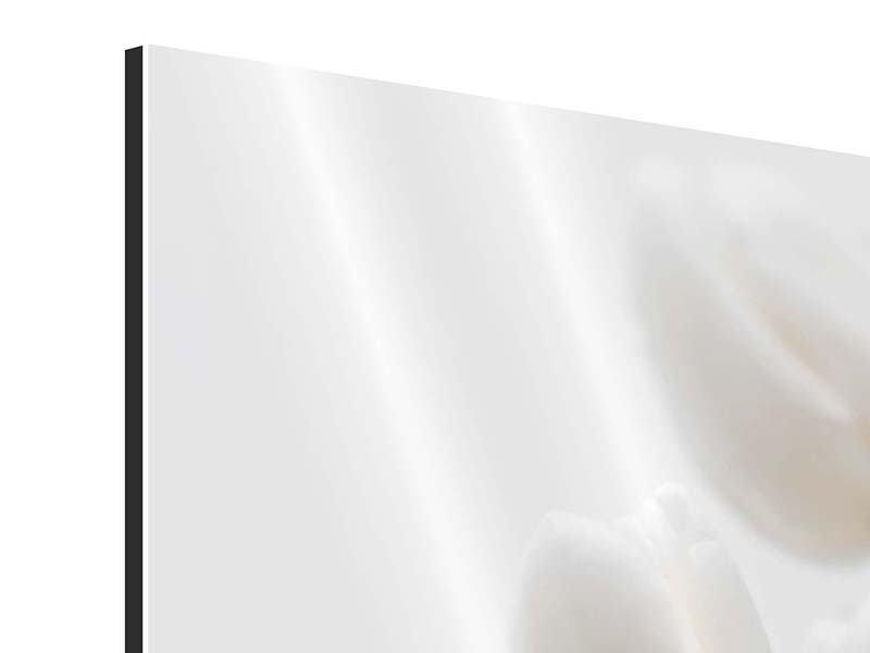 Aluminiumbild Weisse Tulpen