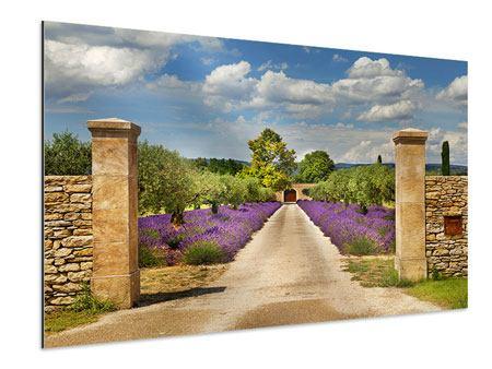 Aluminiumbild Lavendel-Garten