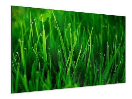 Aluminiumbild Gras mit Morgentau