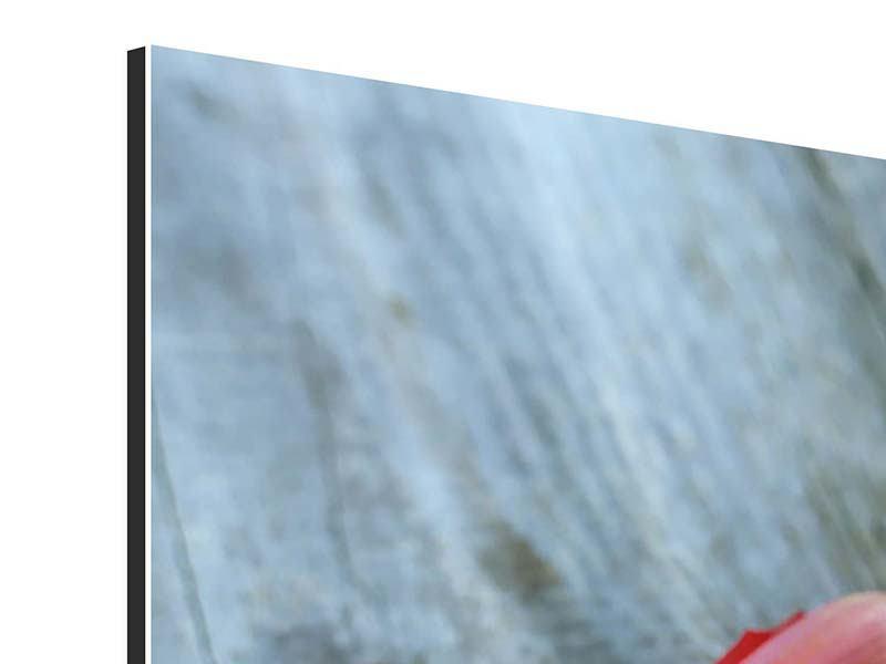 Aluminiumbild Der rote Tulpenstrauss