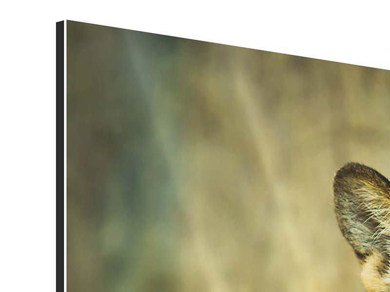 Aluminiumbild Pantherportrait