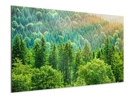 Aluminiumbild Der Waldhügel