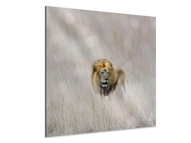 Aluminiumbild Der Löwe