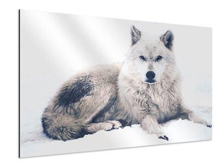 Aluminiumbild Der Wolf