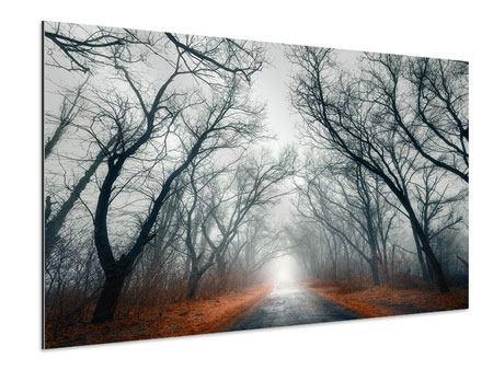 Aluminiumbild Mysteriöse Stimmung im Wald