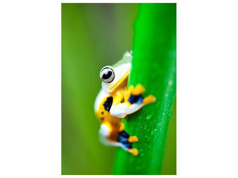Aluminiumbild Der Frosch