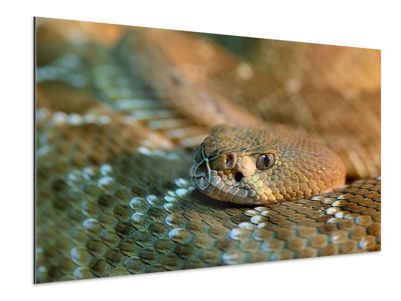 Aluminiumbild Viper