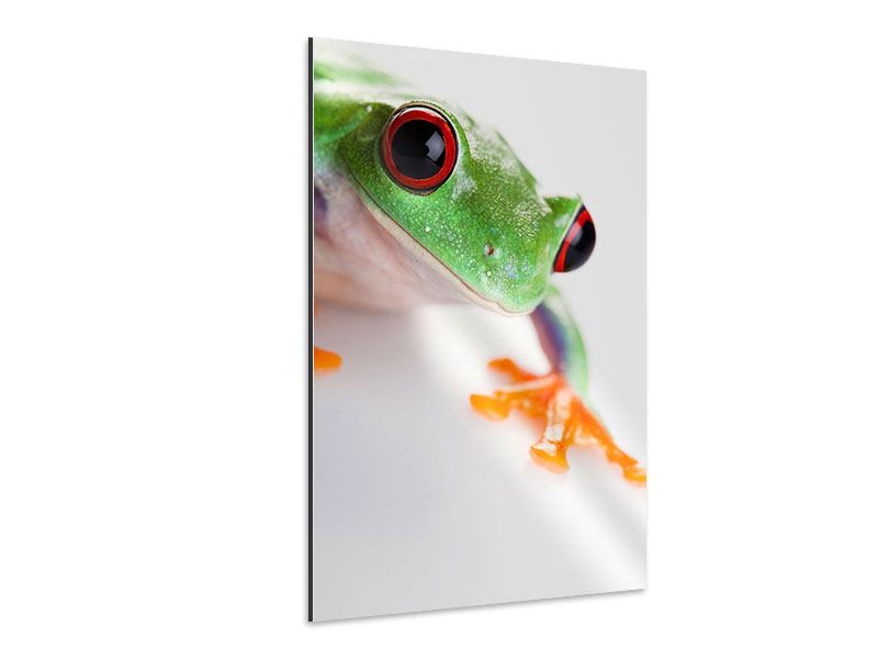 Aluminiumbild Frosch Close up
