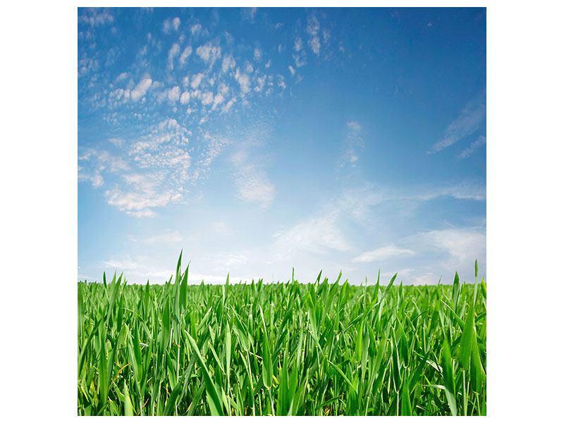 Aluminiumbild Das Gras