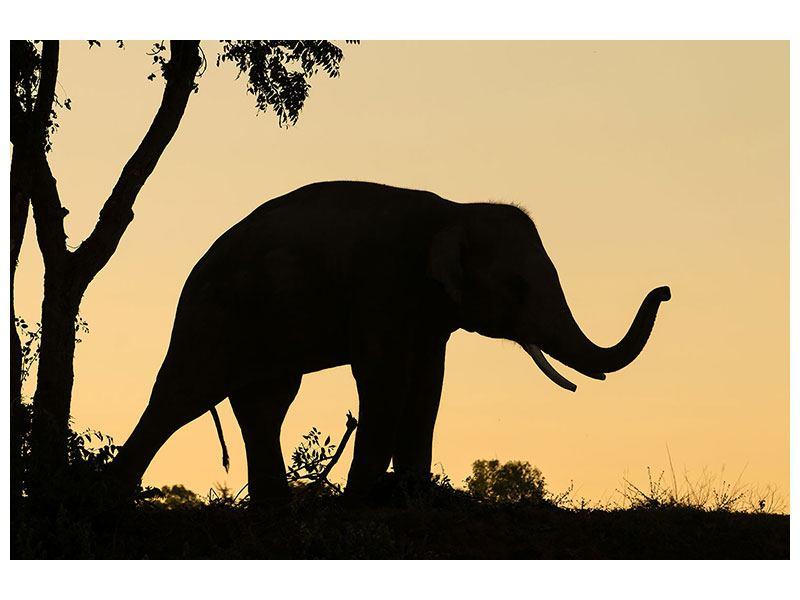 Aluminiumbild Elefant an der Wand