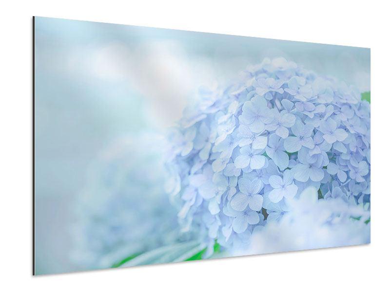 Aluminiumbild Die Hortensie