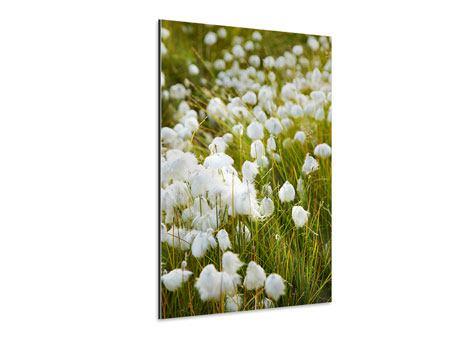 Aluminiumbild Die Wiese der Baumwolle
