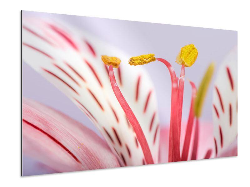 Aluminiumbild Close Up Die exotische Schönheit