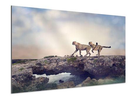 Aluminiumbild Zwei Geparden