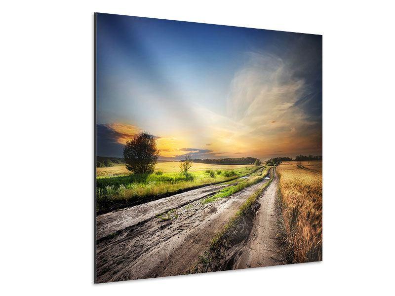 Aluminiumbild Sonnenaufgang am Feld