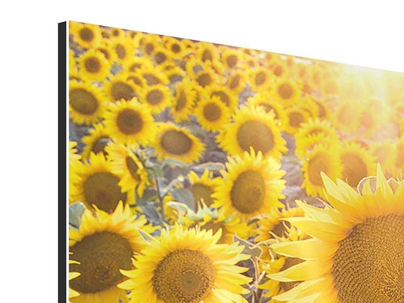 Aluminiumbild Die Sonnenblumenperspektive