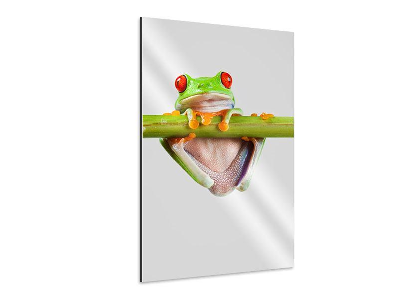 Aluminiumbild Frosch-Akrobatik