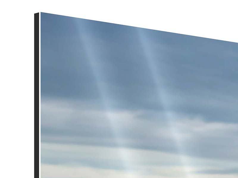 Aluminiumbild Ein Vollblutpferd am Meer