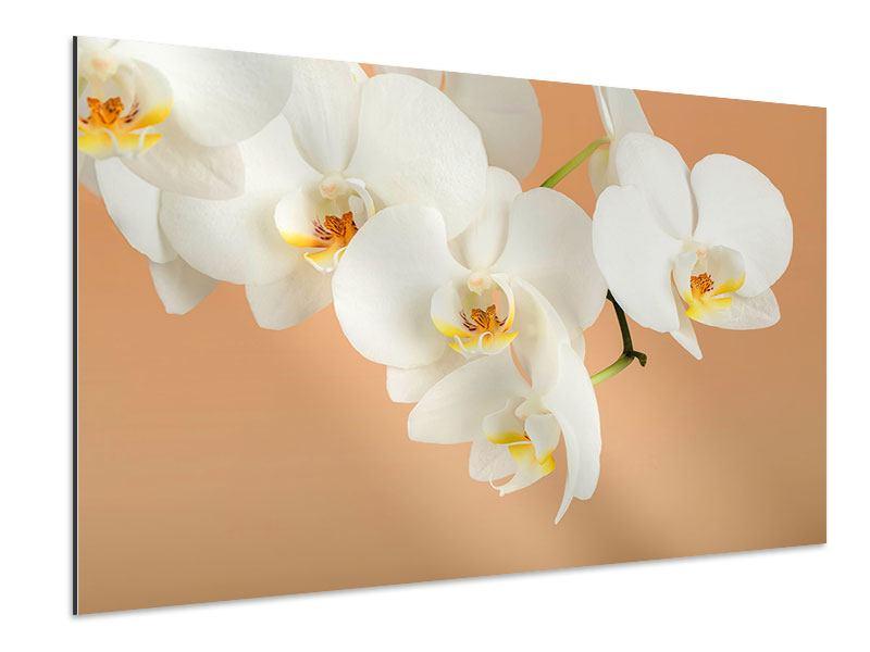 Aluminiumbild Weisse Orchideenblüten