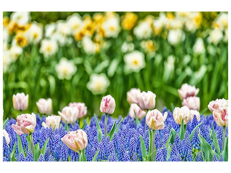 Aluminiumbild Ein Garten mit Tulpen