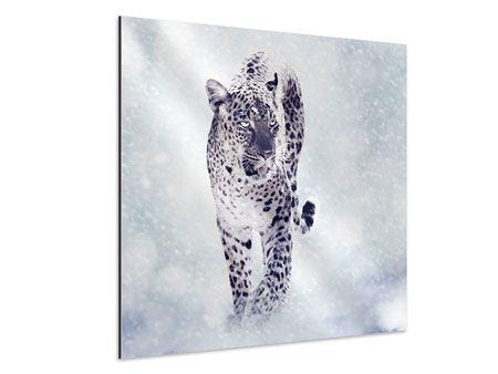 Aluminiumbild Der Leopard