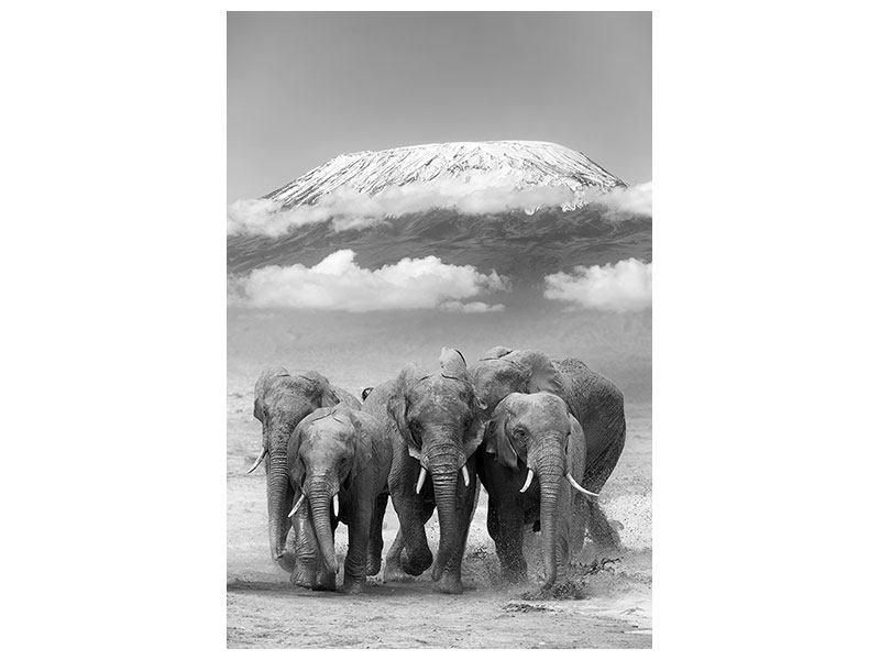 Aluminiumbild Elefantenherde