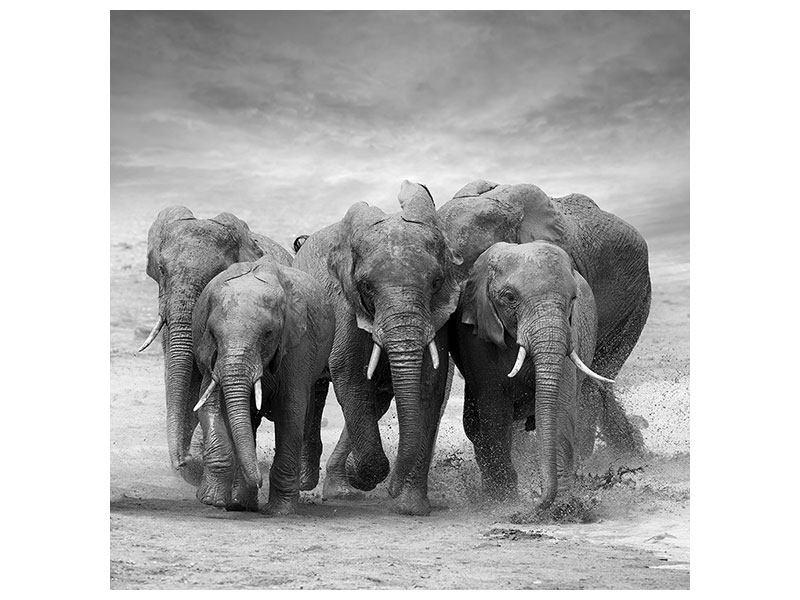 Aluminiumbild Die Elefanten
