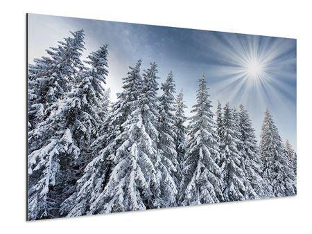 Aluminiumbild Wintertannen