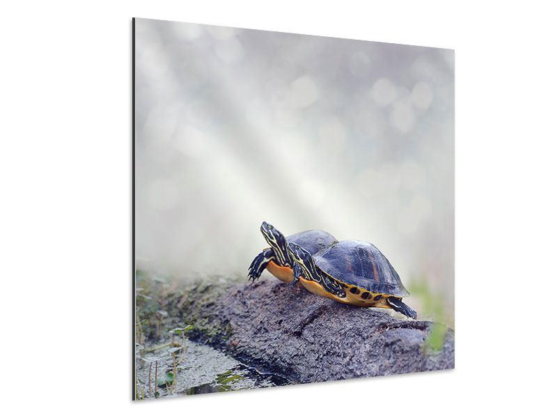 Aluminiumbild Schildkrötenpaar