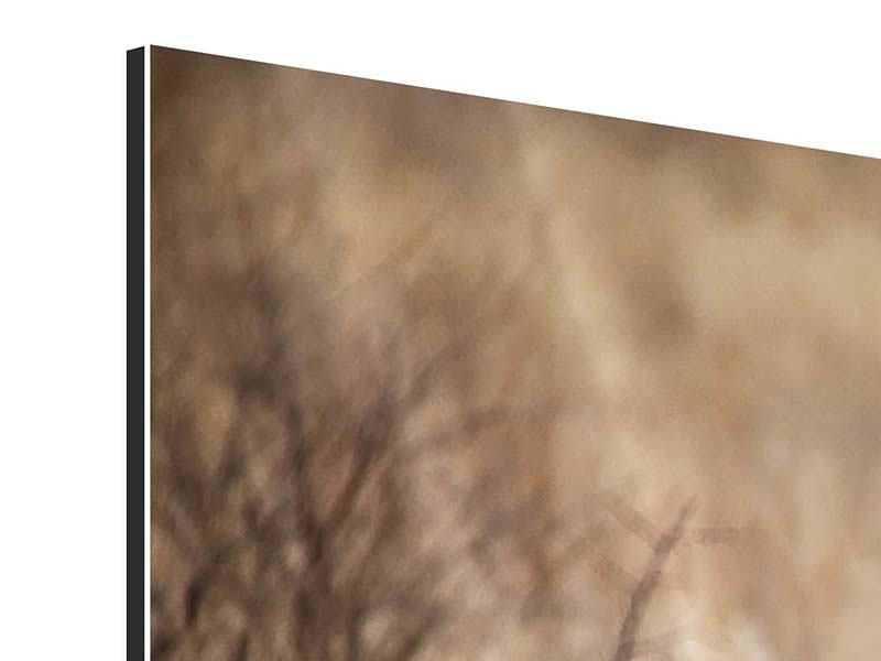 Aluminiumbild Eleganter Gepard