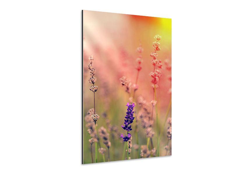Aluminiumbild Der Lavendel