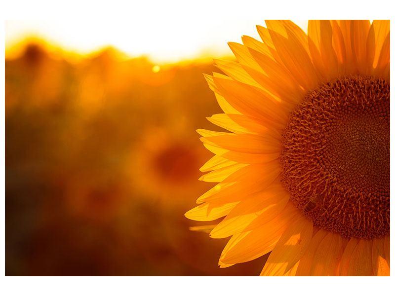 Aluminiumbild Macro-Sonnenblume