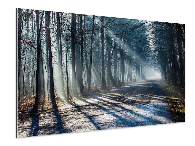 Aluminiumbild Wald im Lichtstrahl