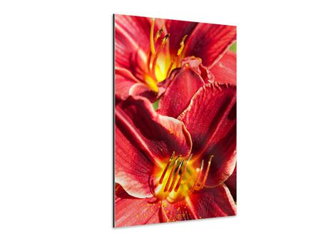 Aluminiumbild Rotes Lilienduo