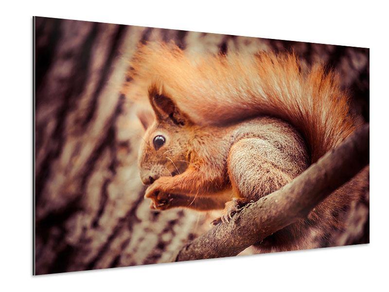 Aluminiumbild Eichhörnchen