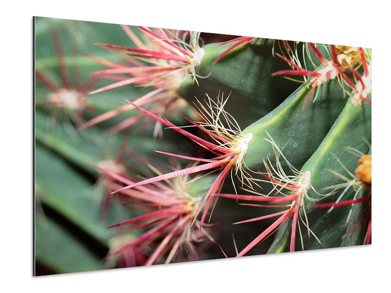 Aluminiumbild Die Kaktusblüte