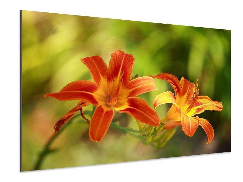 Aluminiumbild Natural Lilien