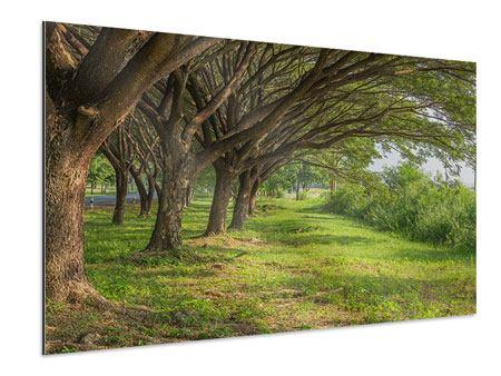 Aluminiumbild Alter Baumbestand