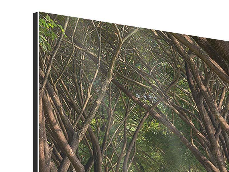 Aluminiumbild Im Forstwald