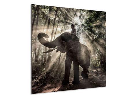Aluminiumbild Der Elefant