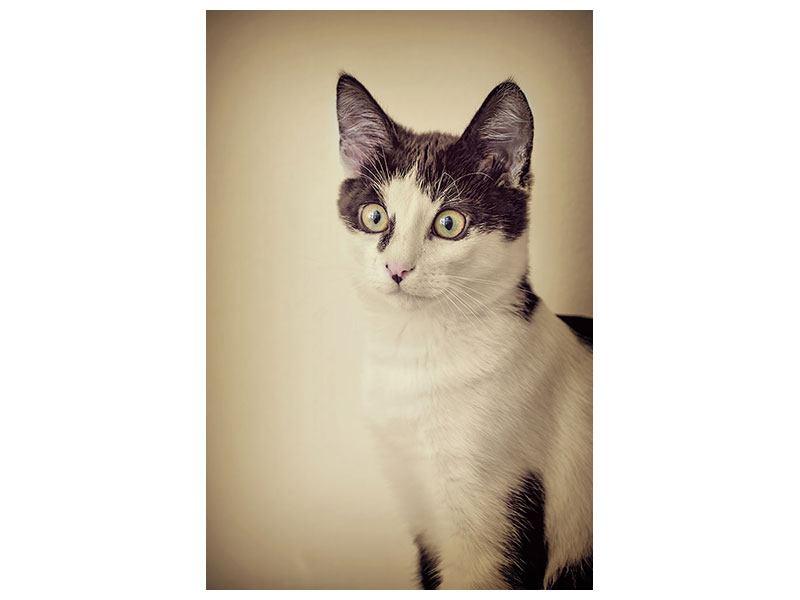 Aluminiumbild Katze